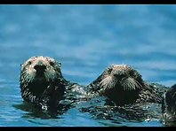 Otters rule
