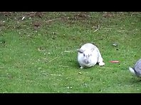 Rabbits outside
