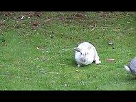 Rabbits outside