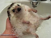Animals Taking a Bath!