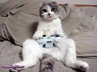 Pets Playing Video Games!