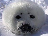 Cute Seals