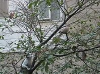 Cat climbs a tree to attack birds