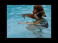 Dachshund has a Swim