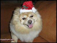 Pets Dressed as Santa!