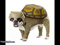 Dog Halloween Costumes for 2011